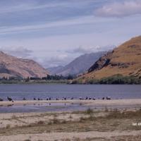 NZ lac et oiseaux