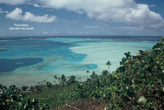 Polynésie Barrière corail
