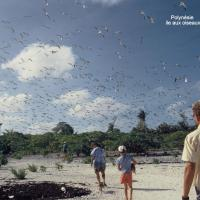 Polynésie ile aux oiseaux