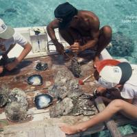 Polynésie nacre 1 ouverture