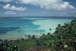 polynesie-barriere-corail.jpg